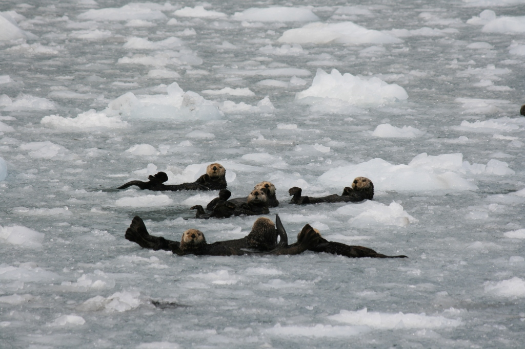 More sea otters