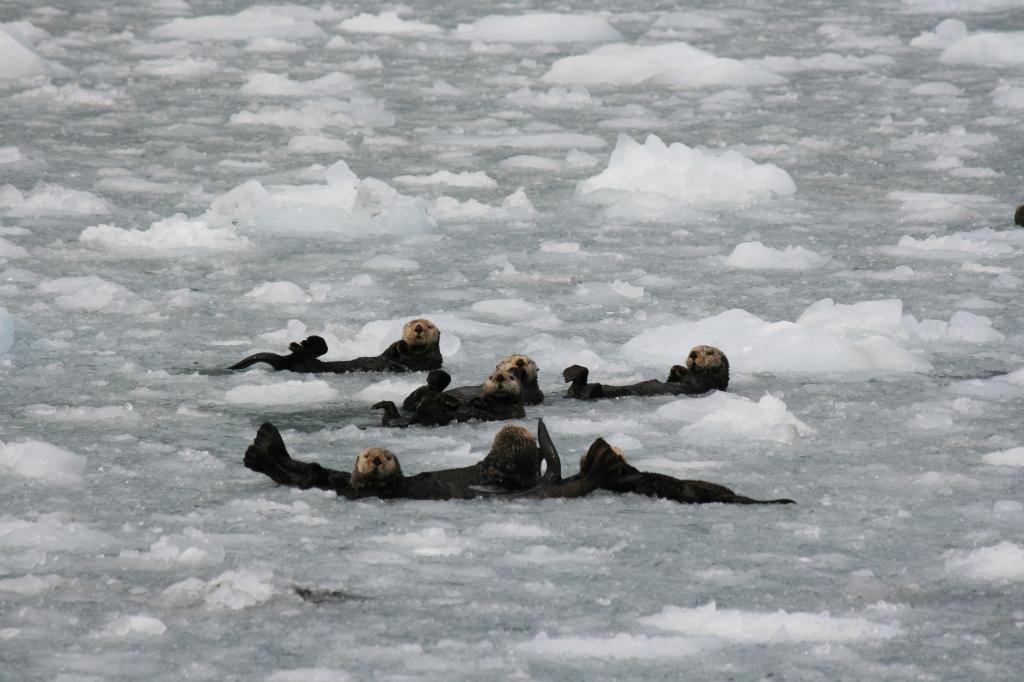 More sea otters