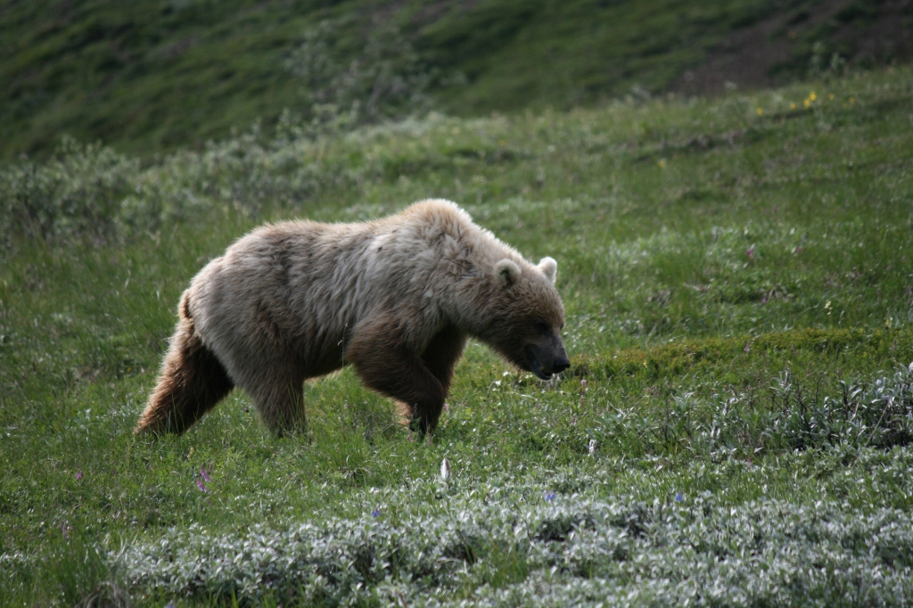 Finally proper bear sighting
